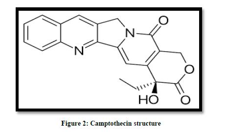 chemical-pharmaceutical-camptothecin